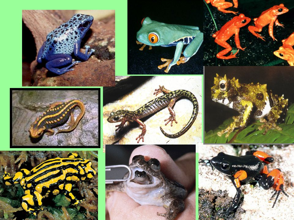 Campaigns Participate in a global public awareness campaign – 2008: Year of the Frog –websites, graphics, education materials, media releases –Do your visitors know we are experiencing the greatest species conservation challenge in the history of humanity.