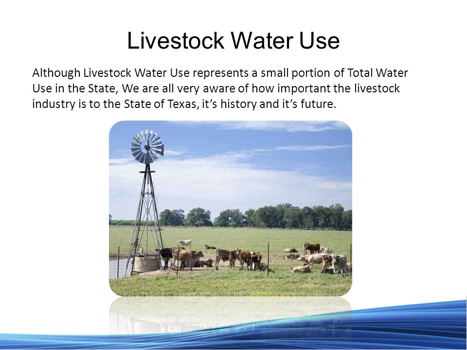 Livestock Water Use Although Livestock Water Use represents a small portion of Total Water Use in the State, We are all very aware of how important the livestock industry is to the State of Texas, it's history and it's future.