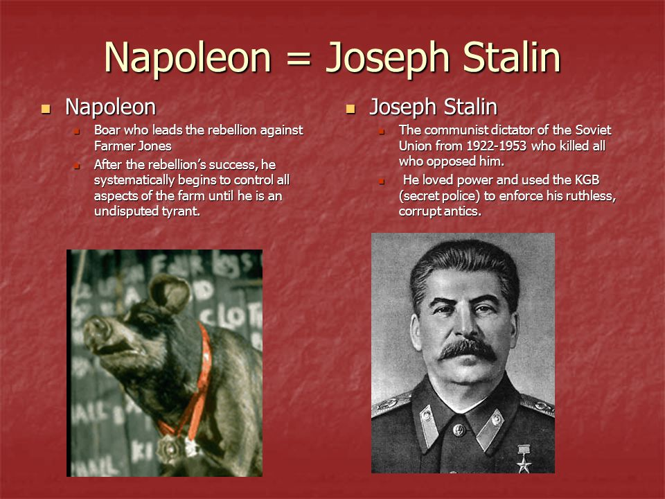 Napoleon = Joseph Stalin Napoleon Napoleon Boar who leads the rebellion against Farmer Jones Boar who leads the rebellion against Farmer Jones After the rebellion's success, he systematically begins to control all aspects of the farm until he is an undisputed tyrant.