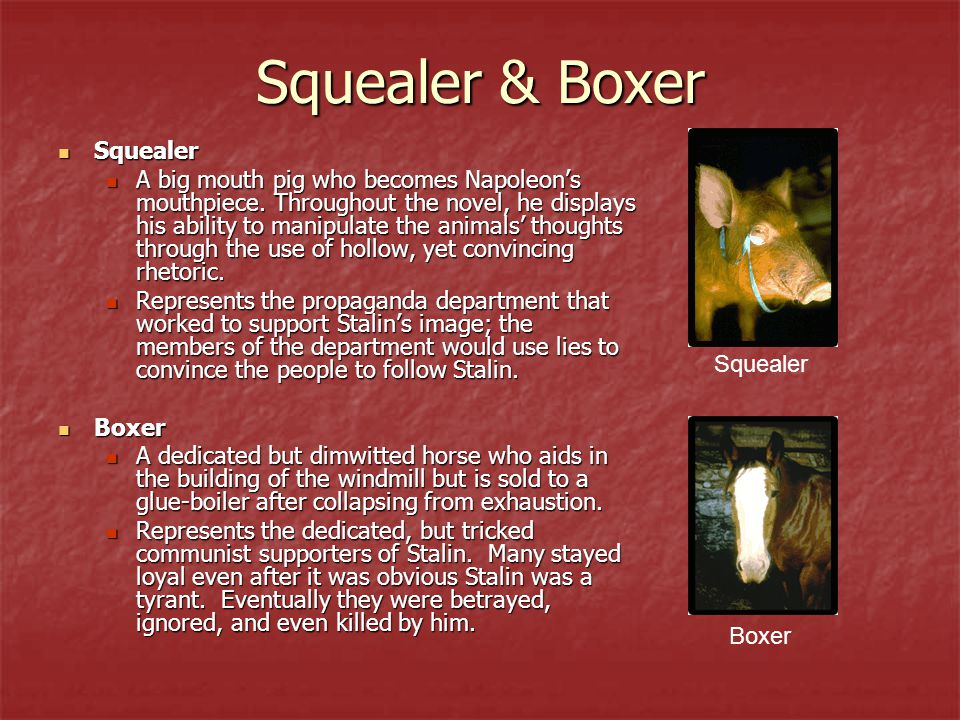 Squealer & Boxer Squealer Squealer A big mouth pig who becomes Napoleon's mouthpiece. Throughout the novel, he displays his ability to manipulate the