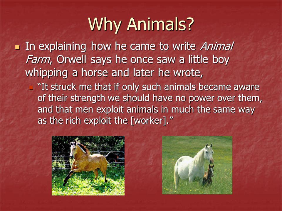 Why Animals.