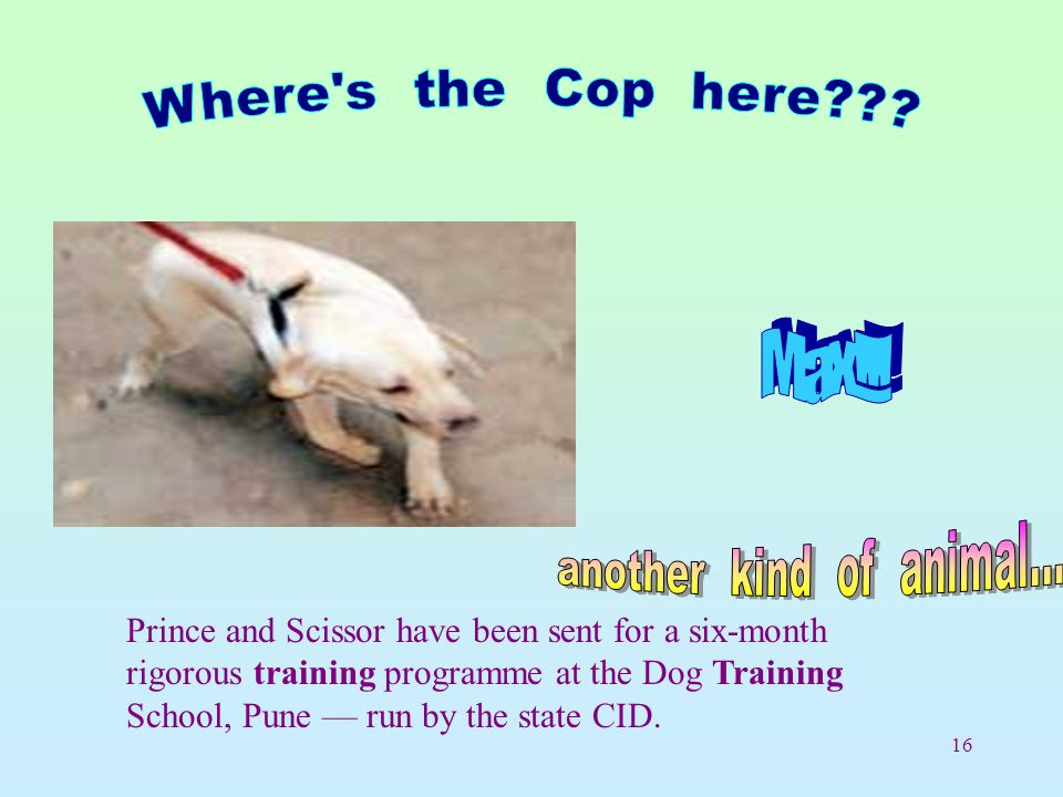 16 Prince and Scissor have been sent for a six-month rigorous training programme at the Dog Training School, Pune — run by the state CID.