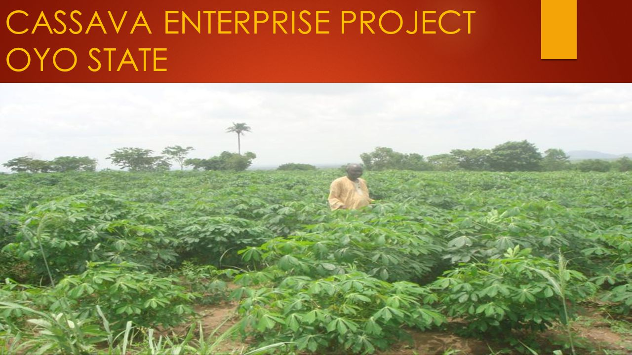 CASSAVA ENTERPRISE PROJECT OYO STATE