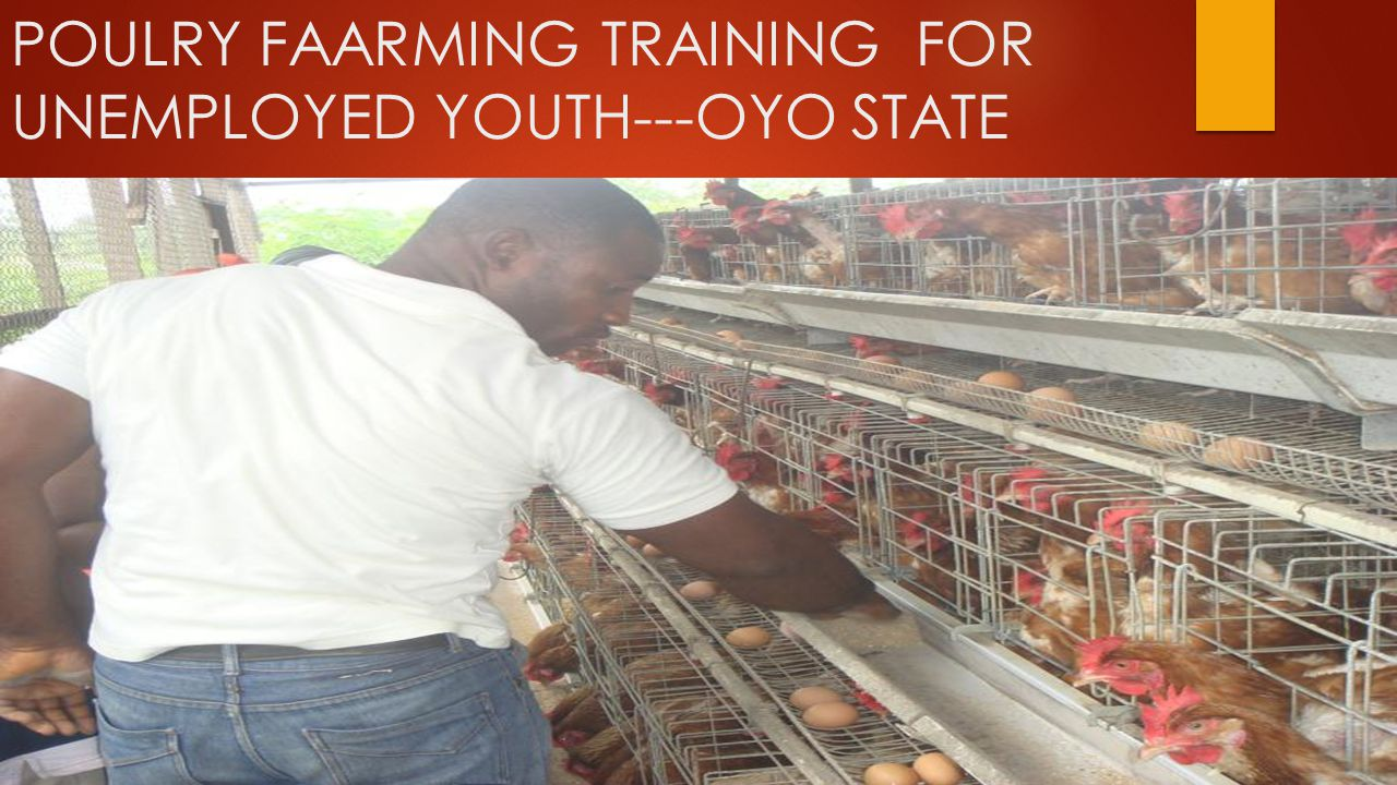 POULRY FAARMING TRAINING FOR UNEMPLOYED YOUTH---OYO STATE