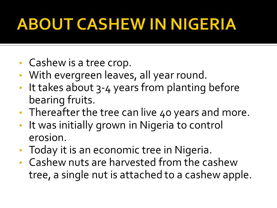 Cashew is a tree crop. With evergreen leaves, all year round.