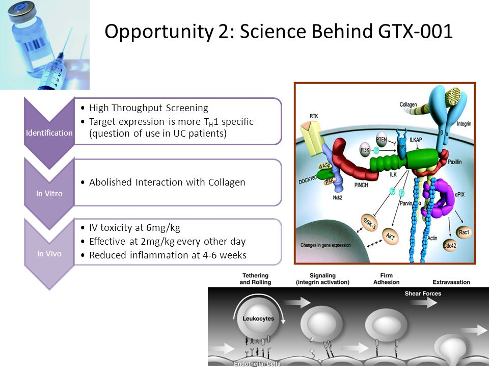 Opportunity 2: Science Behind GTX-001 Mechanism of Action: mAb against  1  1 integrin Identification High Throughput Screening Target expression is more T H 1 specific (question of use in UC patients) In Vitro Abolished Interaction with Collagen In Vivo IV toxicity at 6mg/kg Effective at 2mg/kg every other day Reduced inflammation at 4-6 weeks