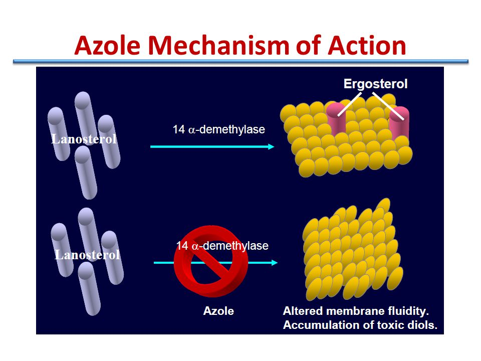 Azole Mechanism of Action