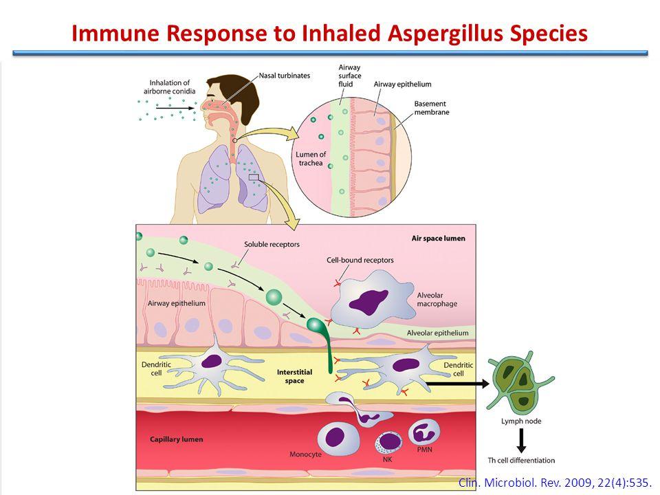 Immune Response to Inhaled Aspergillus Species N Engl J Med 2009;360:1870-84.