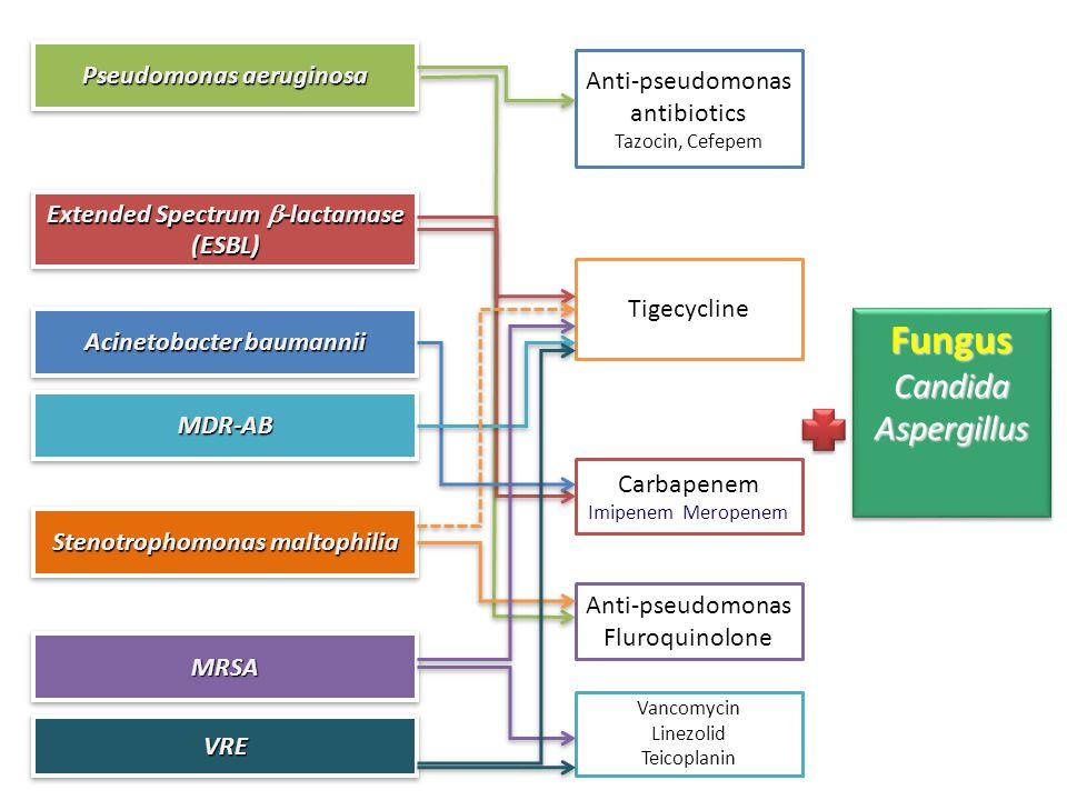 Acinetobacter baumannii MDR-ABMDR-AB Extended Spectrum  -lactamase (ESBL) MRSAMRSA VREVRE Pseudomonas aeruginosa Stenotrophomonas maltophilia Tigecycline Carbapenem Imipenem Meropenem Anti-pseudomonas antibiotics Tazocin, Cefepem Anti-pseudomonas Fluroquinolone Vancomycin Linezolid Teicoplanin FungusCandidaAspergillusFungusCandidaAspergillus