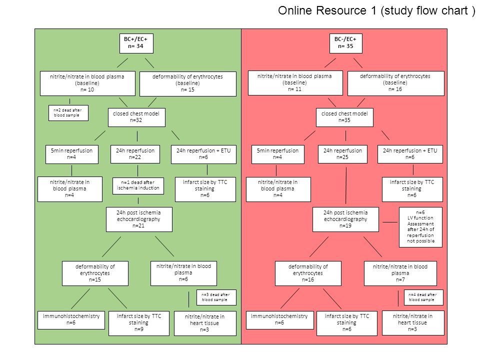 Online Resource 1 (study flow chart ) nitrite/nitrate in blood plasma n=4 BC+/EC+ n= 34 nitrite/nitrate in blood plasma (baseline) n= 10 deformability of erythrocytes (baseline) n= 15 closed chest model n=32 5min reperfusion n=4 24h reperfusion n=22 24h reperfusion + ETU n=6 nitrite/nitrate in blood plasma n=4 infarct size by TTC staining n=6 24h post ischemia echocardiography n=21 deformability of erythrocytes n=15 nitrite/nitrate in blood plasma n=6 immunohistochemistry n=6 infarct size by TTC staining n=9 nitrite/nitrate in heart tissue n=3 n=1 dead after ischemia induction n=2 dead after blood sample n=3 dead after blood sample BC-/EC+ n= 35 nitrite/nitrate in blood plasma (baseline) n= 11 deformability of erythrocytes (baseline) n= 16 closed chest model n=35 5min reperfusion n=4 24h reperfusion n=25 24h reperfusion + ETU n=6 infarct size by TTC staining n=6 24h post ischemia echocardiography n=19 deformability of erythrocytes n=16 nitrite/nitrate in blood plasma n=7 immunohistochemistry n=6 infarct size by TTC staining n=6 nitrite/nitrate in heart tissue n=3 n=6 LV function Assessment after 24h of reperfusion not possible n=4 dead after blood sample