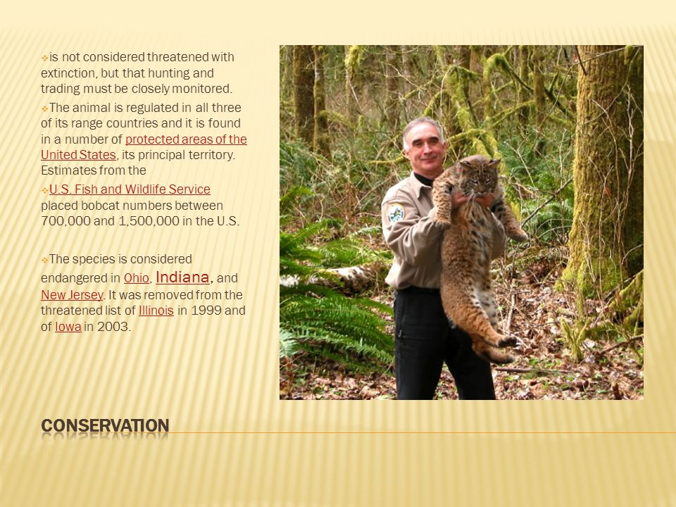  is not considered threatened with extinction, but that hunting and trading must be closely monitored.