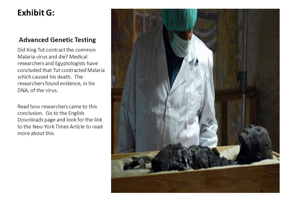 Exhibit G: Advanced Genetic Testing Did King Tut contract the common Malaria virus and die? Medical researchers and Egyptologists have concluded that
