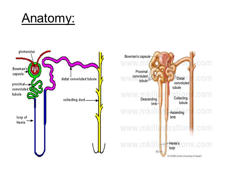 Anatomy: 11