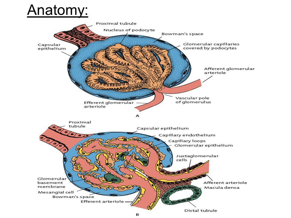 Anatomy: 12