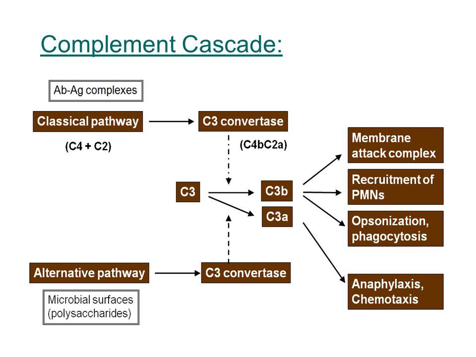 Complement Cascade: 4