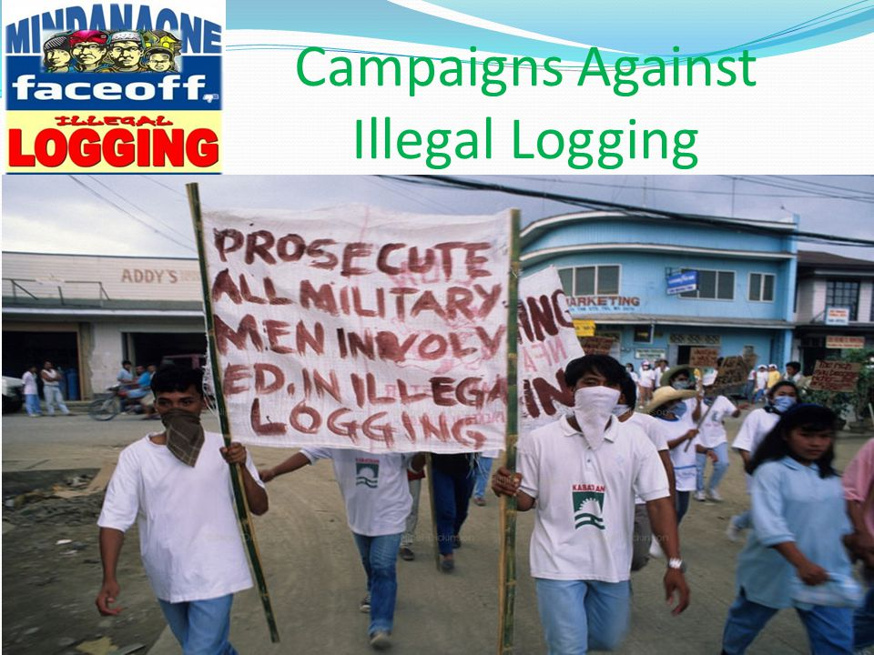 Campaigns Against Illegal Logging
