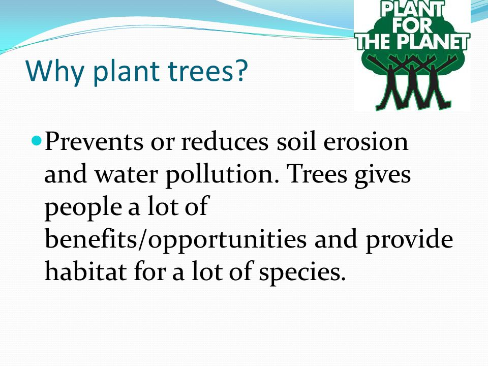 Why plant trees. Prevents or reduces soil erosion and water pollution.