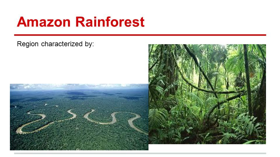 Amazon Rainforest Region characterized by: