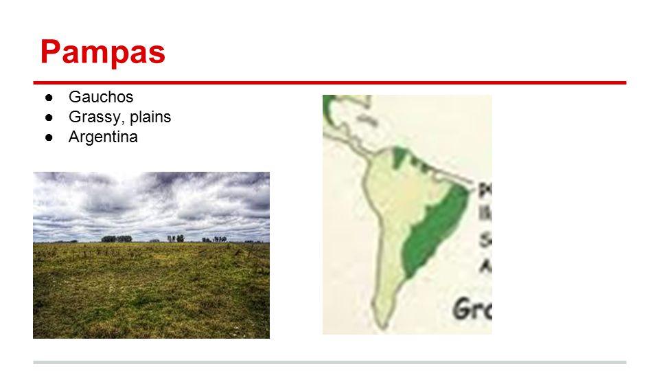 Pampas ●Gauchos ●Grassy, plains ●Argentina