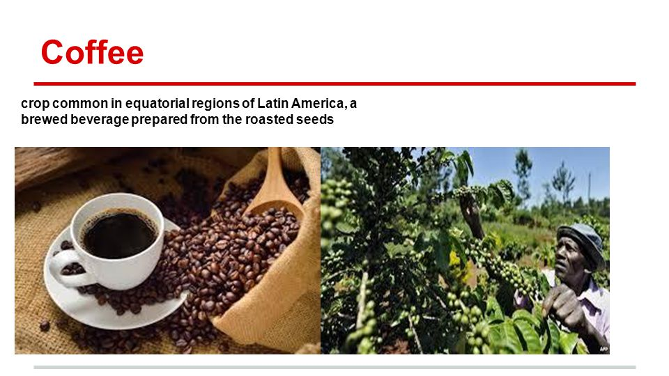 Coffee crop common in equatorial regions of Latin America, a brewed beverage prepared from the roasted seeds