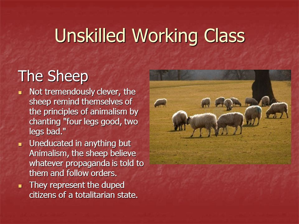 Unskilled Working Class The Sheep Not tremendously clever, the sheep remind themselves of the principles of animalism by chanting
