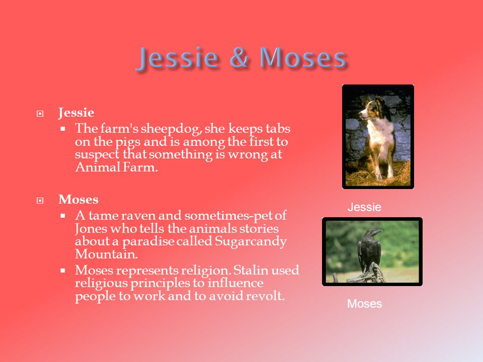  Jessie  The farm s sheepdog, she keeps tabs on the pigs and is among the first to suspect that something is wrong at Animal Farm.