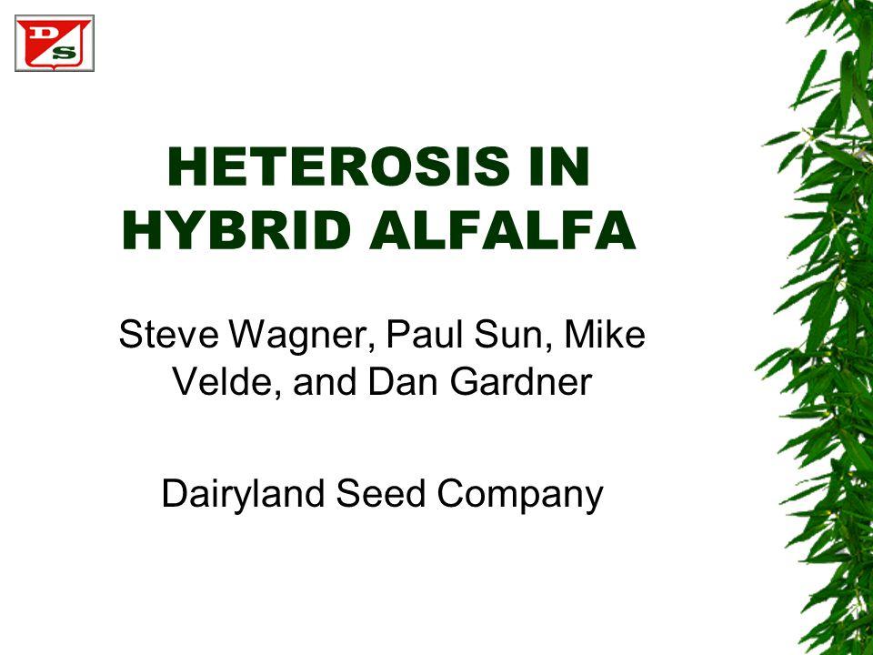 HETEROSIS IN HYBRID ALFALFA Steve Wagner, Paul Sun, Mike Velde, and Dan Gardner Dairyland Seed Company