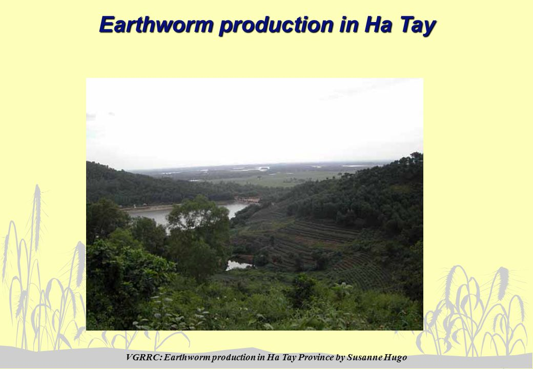 VGRRC: Earthworm production in Ha Tay Province by Susanne Hugo Earthworm production in Ha Tay