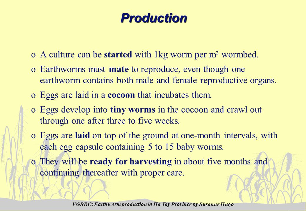 VGRRC: Earthworm production in Ha Tay Province by Susanne HugoProduction oA culture can be started with 1kg worm per m² wormbed.