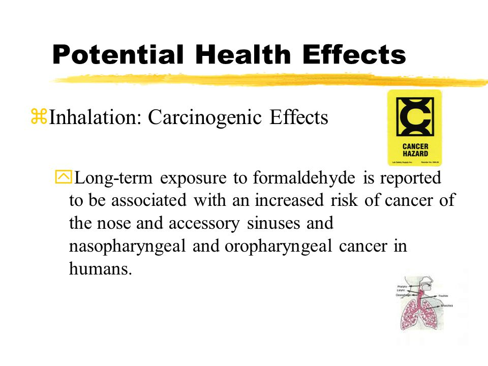 Potential Health Effects zInhalation: Carcinogenic Effects yLong-term exposure to formaldehyde is reported to be associated with an increased risk of cancer of the nose and accessory sinuses and nasopharyngeal and oropharyngeal cancer in humans.