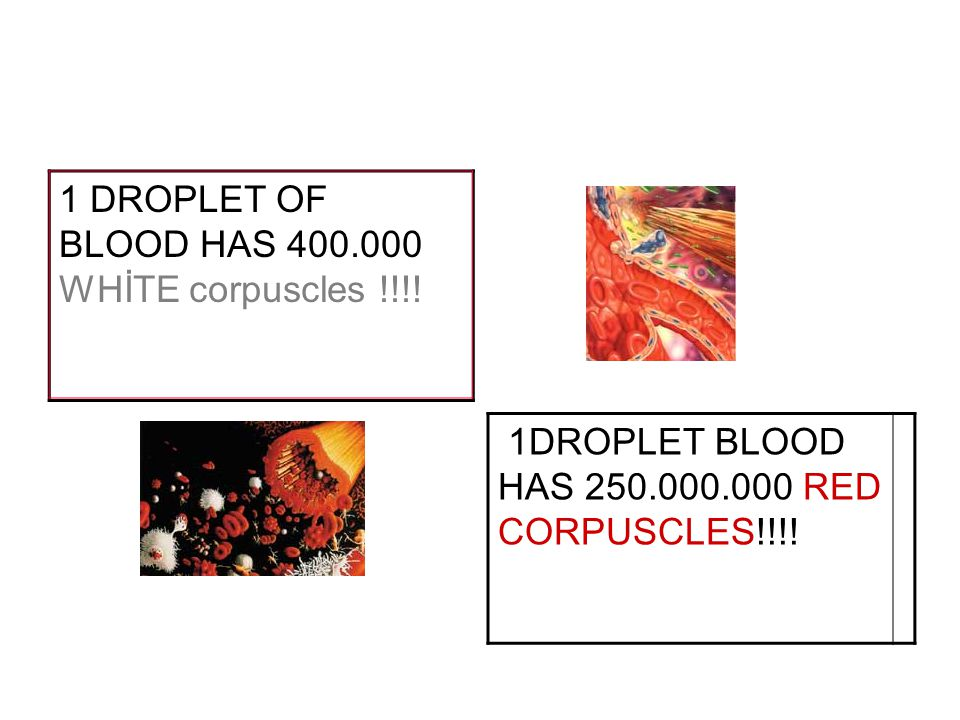 1 DROPLET OF BLOOD HAS 400.000 WHİTE corpuscles !!!! 1DROPLET BLOOD HAS 250.000.000 RED CORPUSCLES!!!!