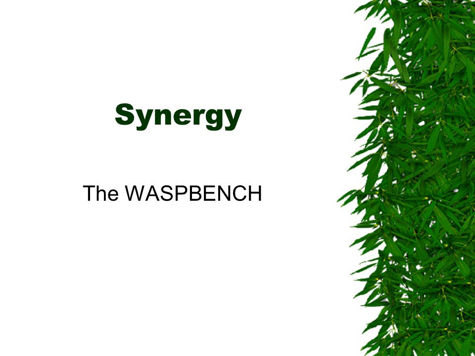 Synergy The WASPBENCH
