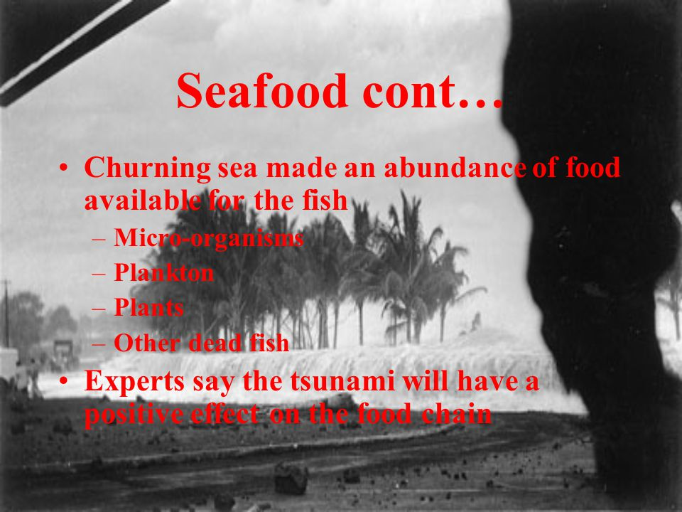 Seafood cont… Churning sea made an abundance of food available for the fish –Micro-organisms –Plankton –Plants –Other dead fish Experts say the tsunam