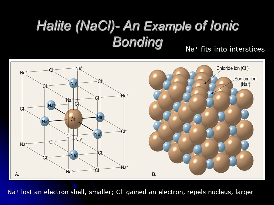 Halite (NaCl)- An Example of Ionic Bonding Na + lost an electron shell, smaller; Cl - gained an electron, repels nucleus, larger Na + fits into inters