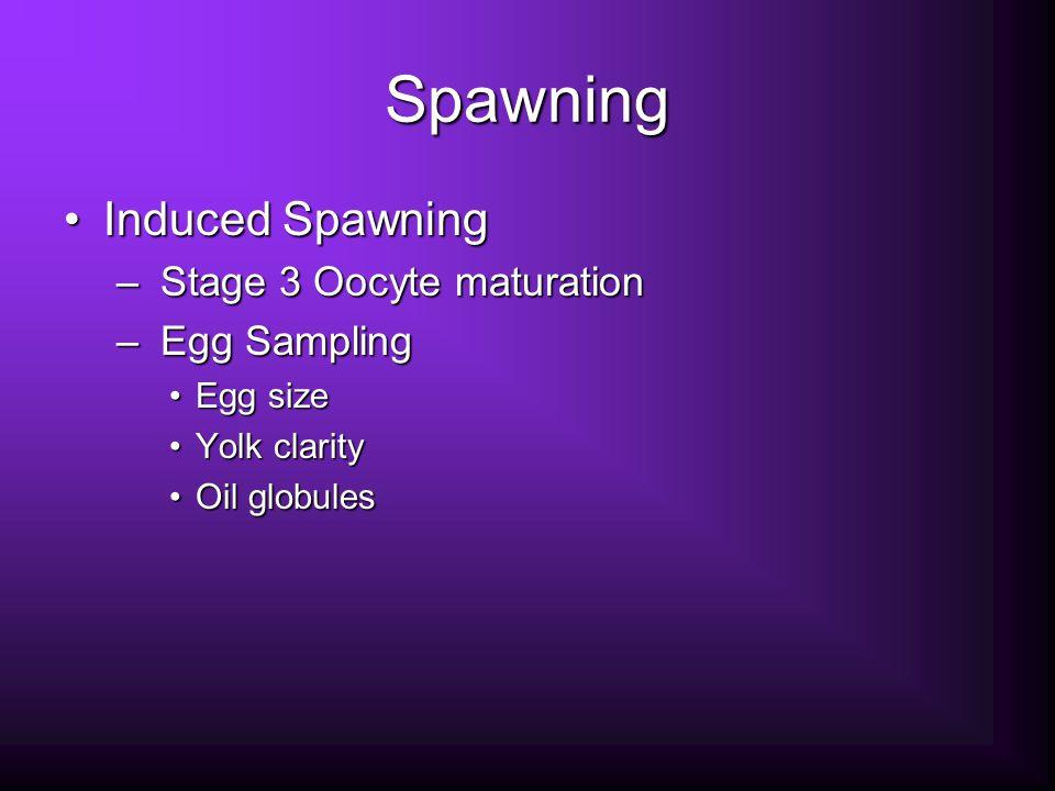 Spawning Induced SpawningInduced Spawning – Stage 3 Oocyte maturation – Egg Sampling Egg sizeEgg size Yolk clarityYolk clarity Oil globulesOil globules