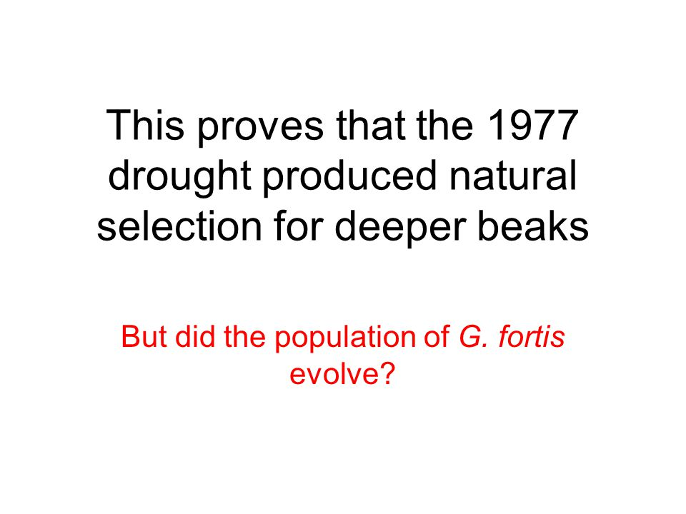 This proves that the 1977 drought produced natural selection for deeper beaks But did the population of G.