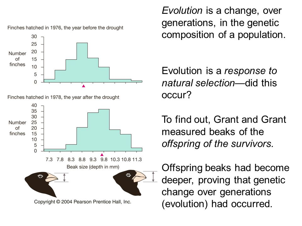 Evolution is a change, over generations, in the genetic composition of a population.