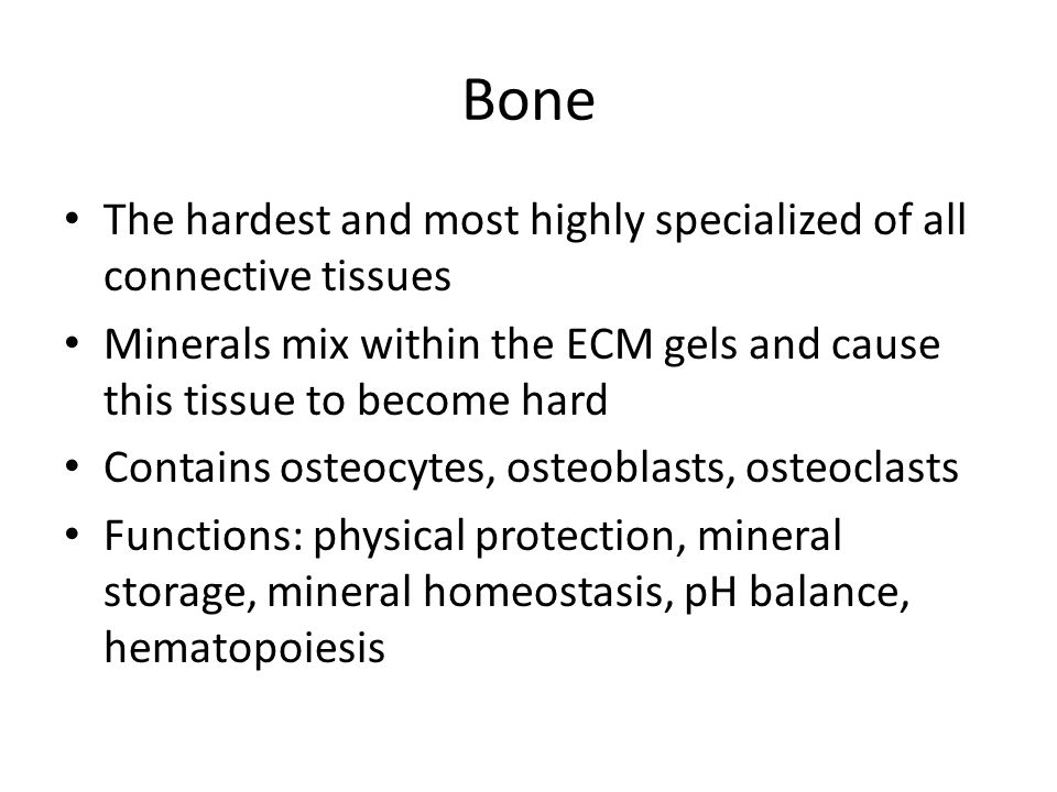 Bone The hardest and most highly specialized of all connective tissues Minerals mix within the ECM gels and cause this tissue to become hard Contains osteocytes, osteoblasts, osteoclasts Functions: physical protection, mineral storage, mineral homeostasis, pH balance, hematopoiesis