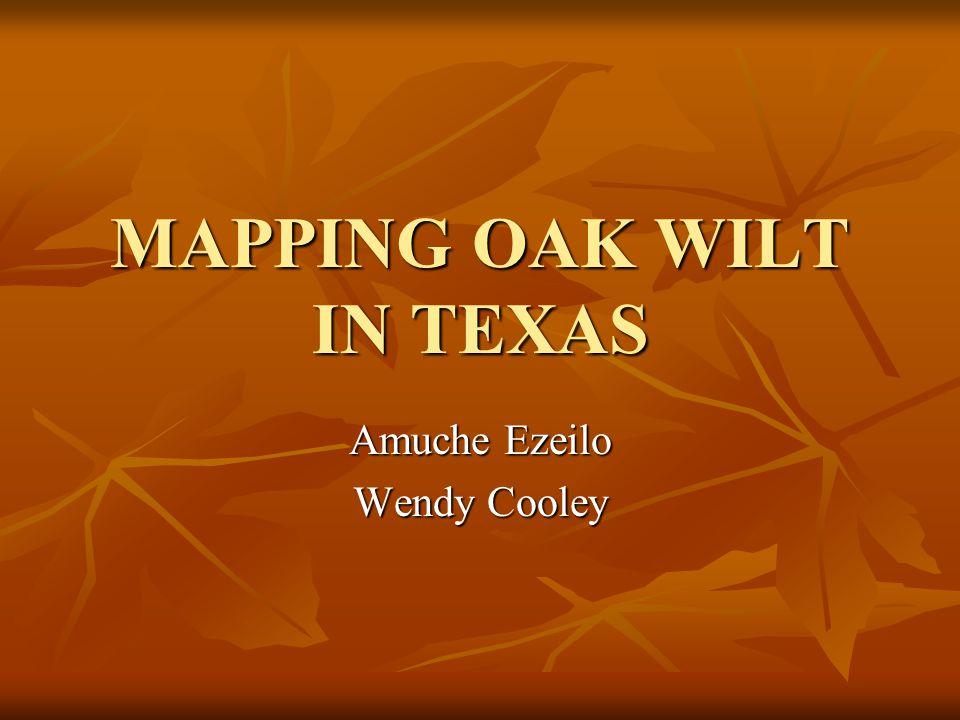 MAPPING OAK WILT IN TEXAS Amuche Ezeilo Wendy Cooley