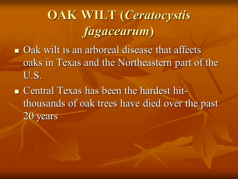 OAK WILT (Ceratocystis fagacearum) Oak wilt is an arboreal disease that affects oaks in Texas and the Northeastern part of the U.S.
