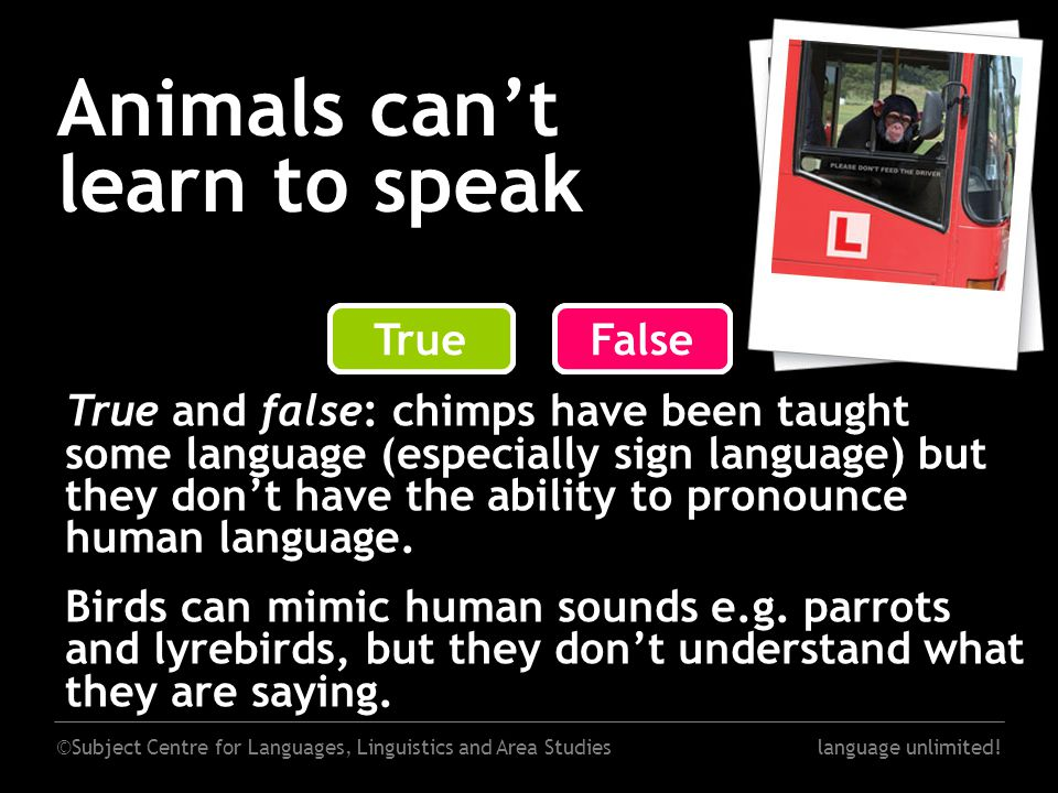 ©Subject Centre for Languages, Linguistics and Area Studieslanguage unlimited! Animals can't learn to speak False True and false: chimps have been tau