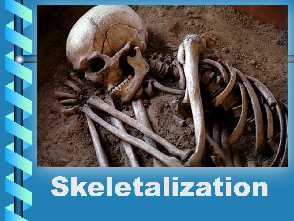 Skeletalization