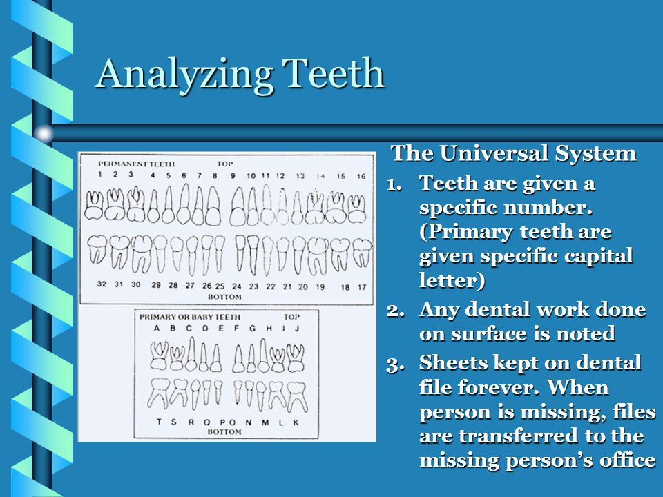 Analyzing Teeth The Universal System 1.Teeth are given a specific number.