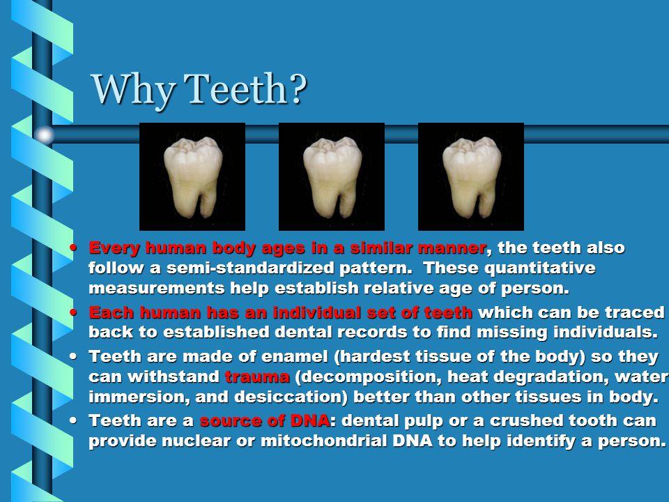Why Teeth.