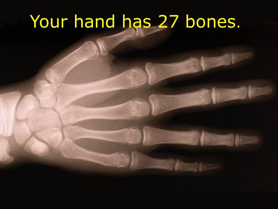 Your hand has 27 bones.