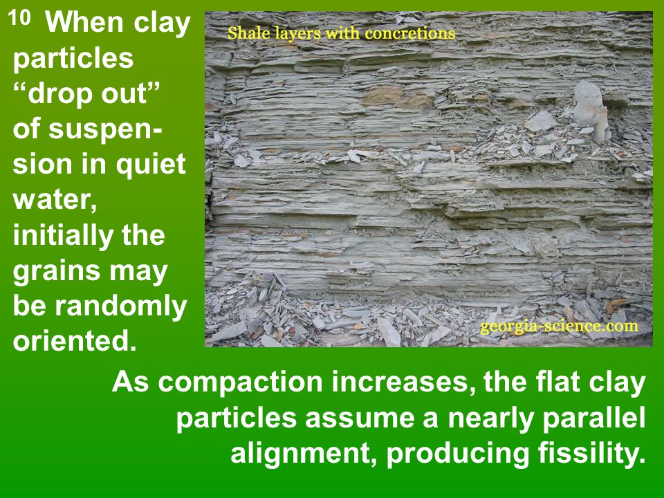 """When clay particles """"drop out"""" of suspen- sion in quiet water, initially the grains may be randomly oriented. As compaction increases, the flat clay p"""