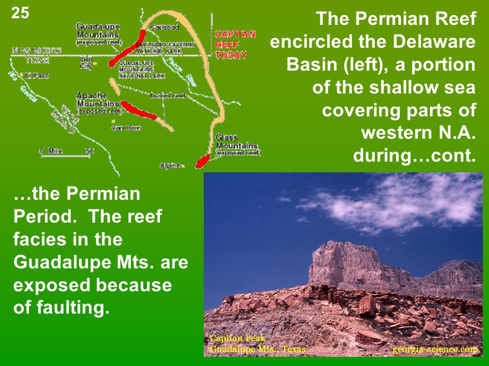 The Permian Reef encircled the Delaware Basin (left), a portion of the shallow sea covering parts of western N.A. during…cont. …the Permian Period. Th