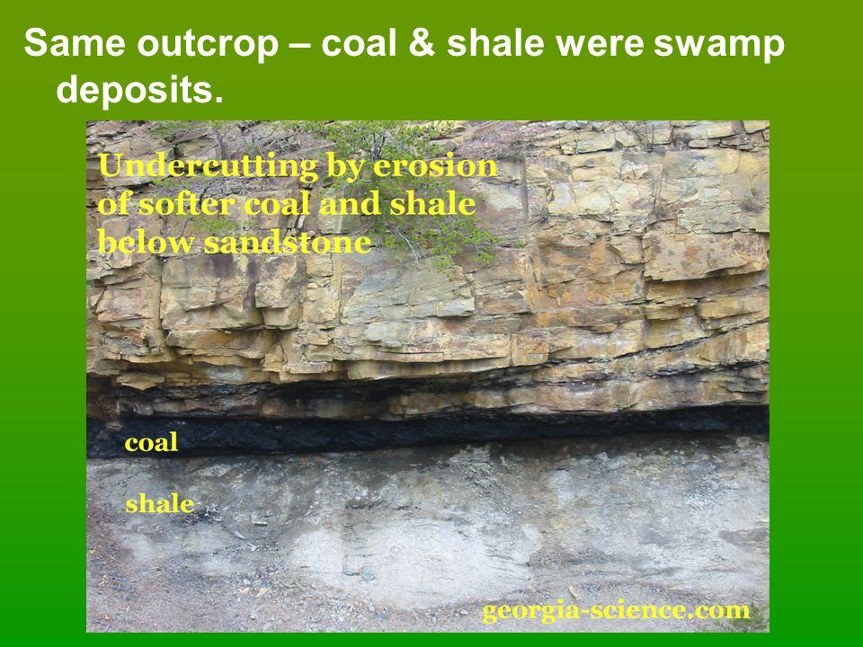 Same outcrop – coal & shale were swamp deposits.