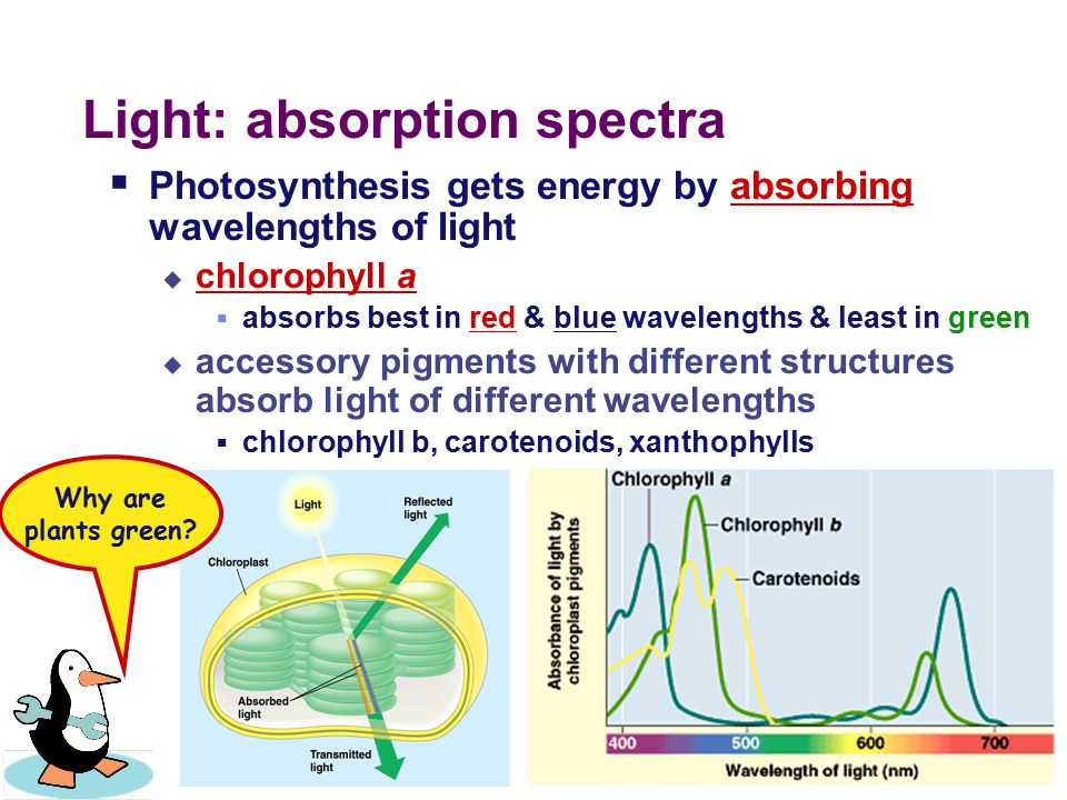 A Look at Light  The spectrum of color ROYGBIV