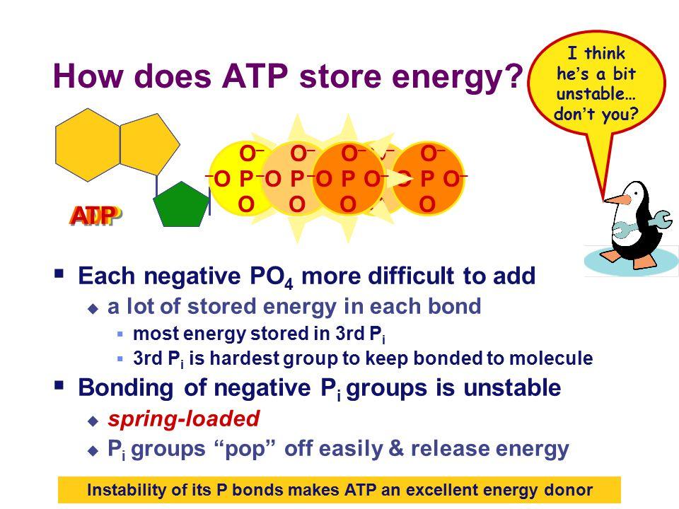 ATP high energy bonds How efficient.